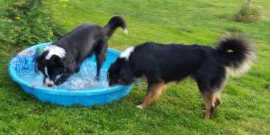 water fun crop